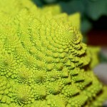 Stunning Fractals in Nature